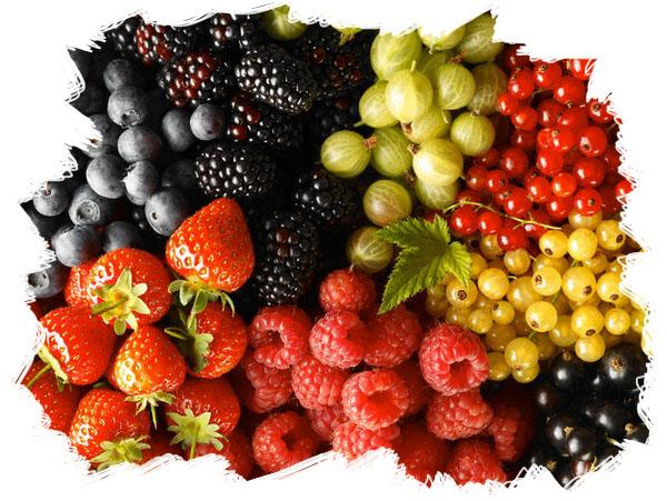 ягоды фото