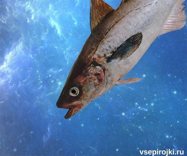 рыба минтай фото