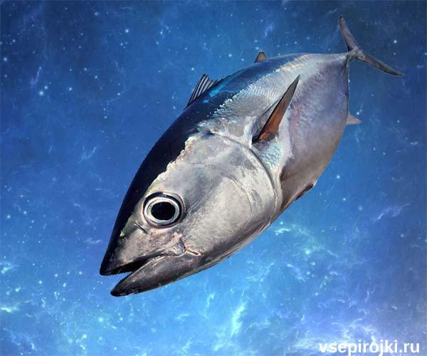 тунец фото